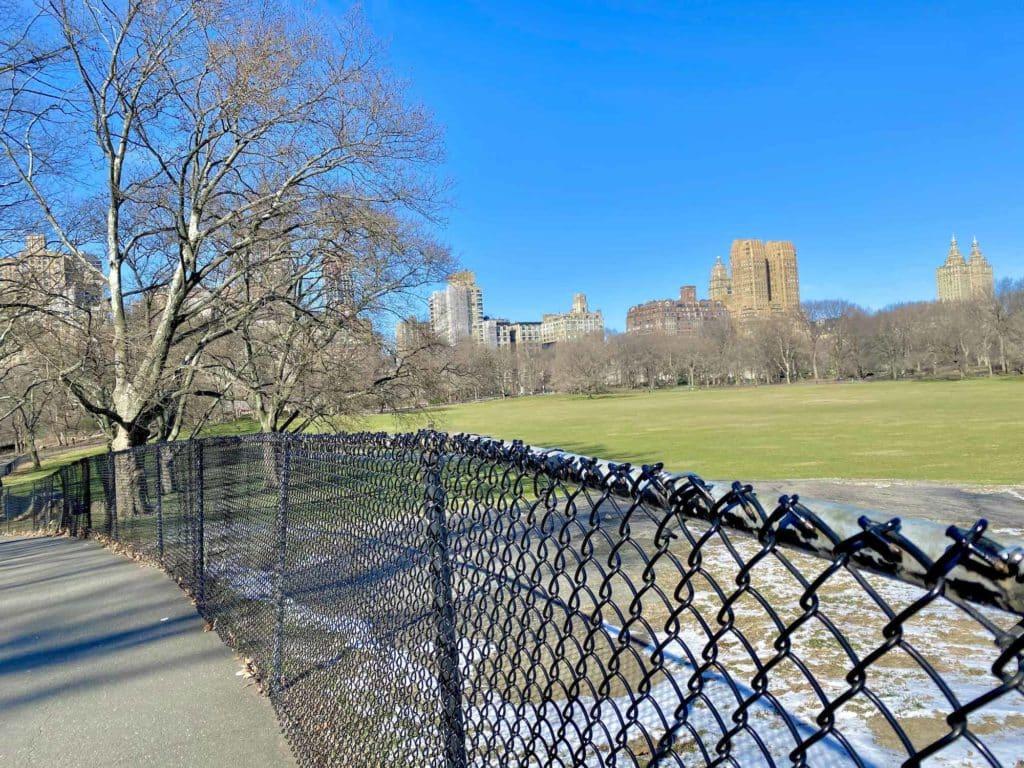 Grünfläche im Central Park 1