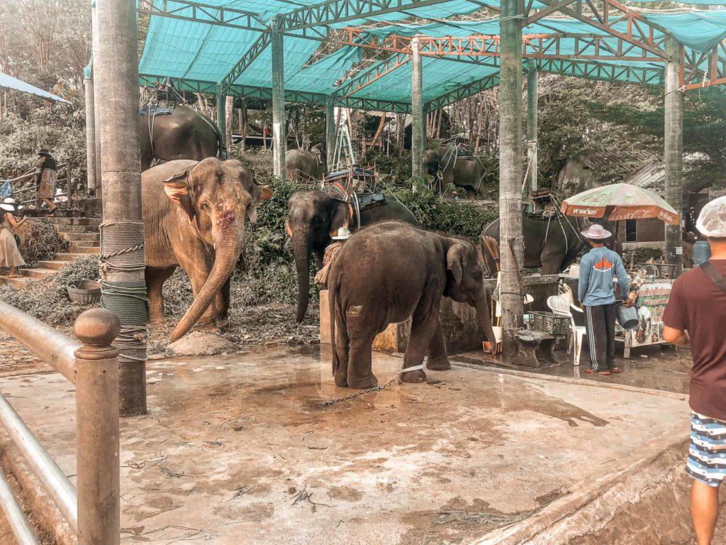 Thailand Elefanten