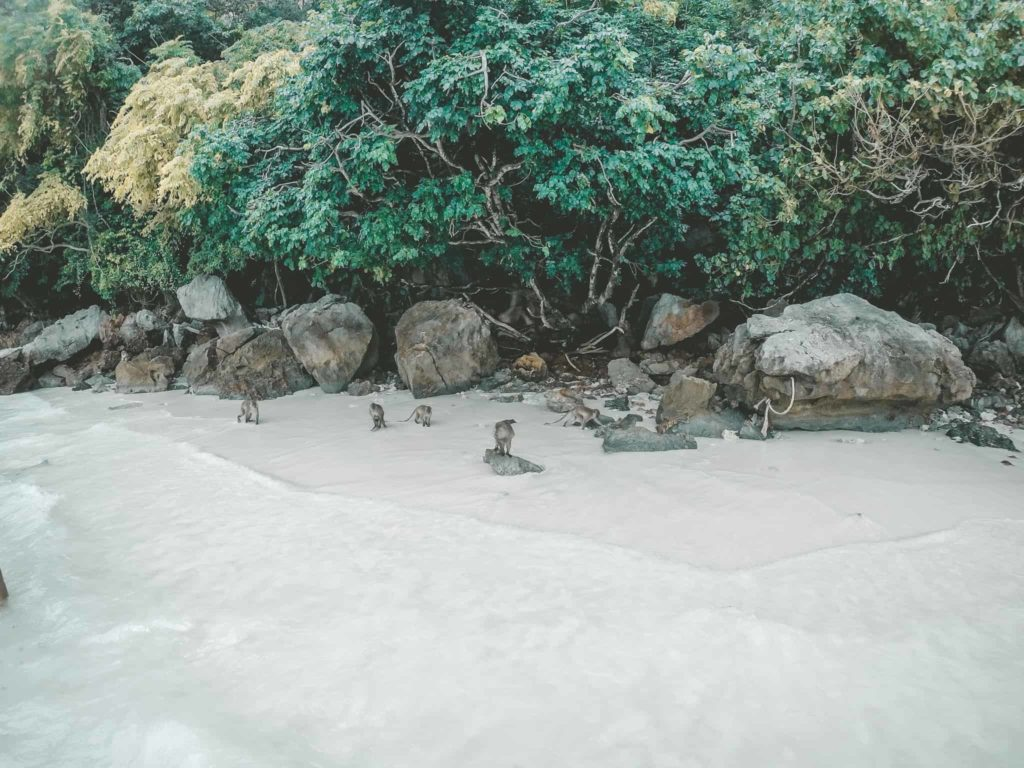 Affen auf Ko Phi Phi (Monkey Beach)
