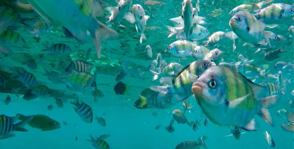 In den Buchten vor Ko Phi Phi kann man unglaublich gut schnorcheln
