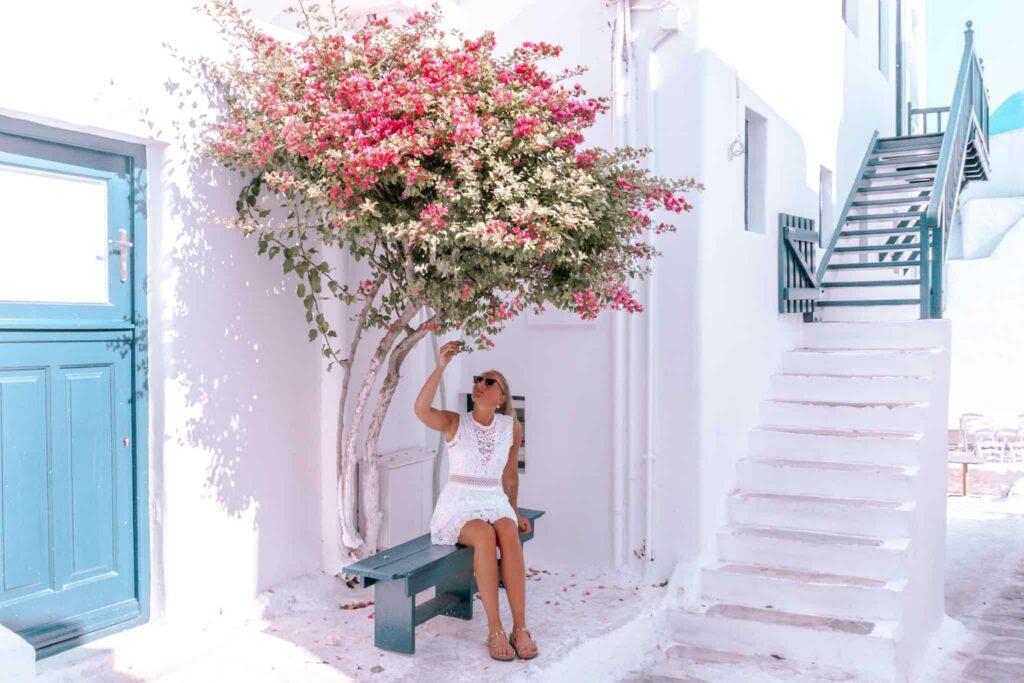 Pinker Baum in der Innenstadt von Mykonos
